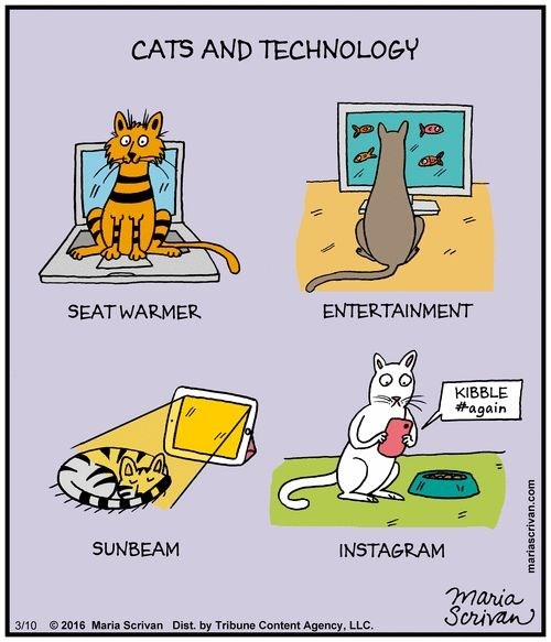 Funny web comic about cats and technology and how they work together, sort of.