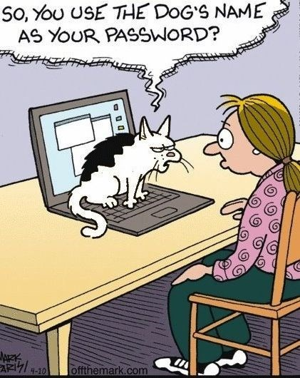 Funny cat web comic about kitty getting angry you used the dog's name for computer password.