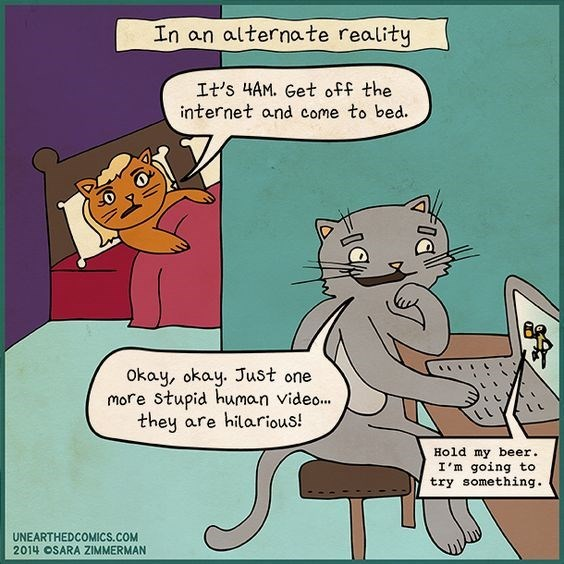 Webcomic about a cat up late on the computer watching videos of humans doing stupid stuff.