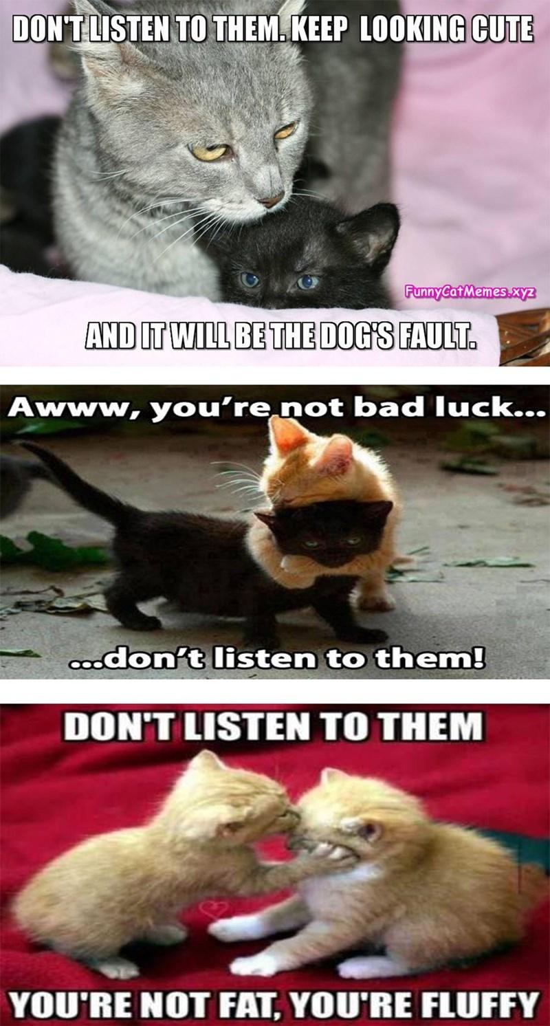 3 funny memes of cat comforting his friend