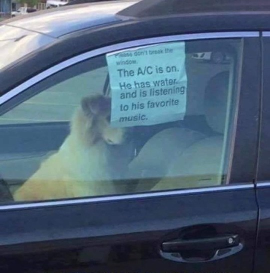 dogs car funny image - 9031517696