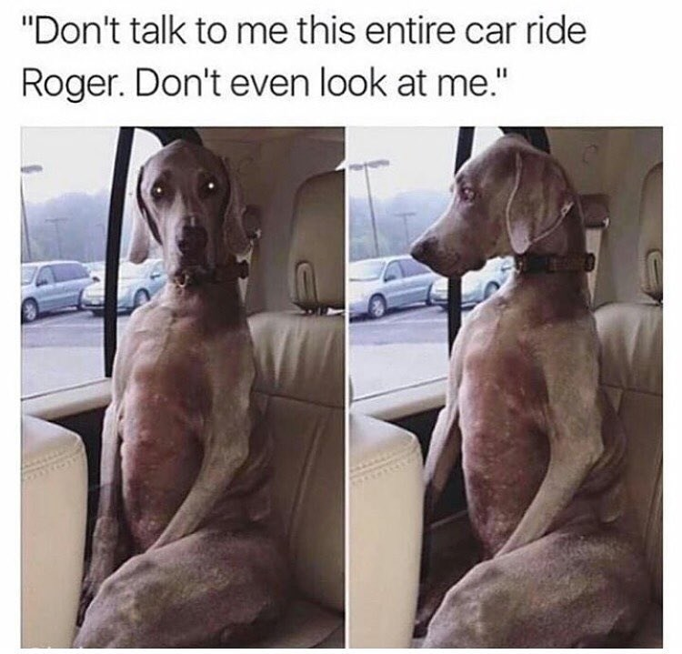 Funny pictures of a dog sitting in the backseat of a car with attitude made into a funny meme to Roger.