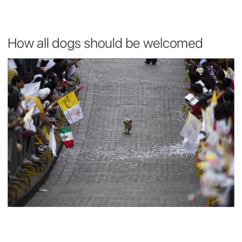 How all dogs should arrive, funny meme with dog walking along parade.