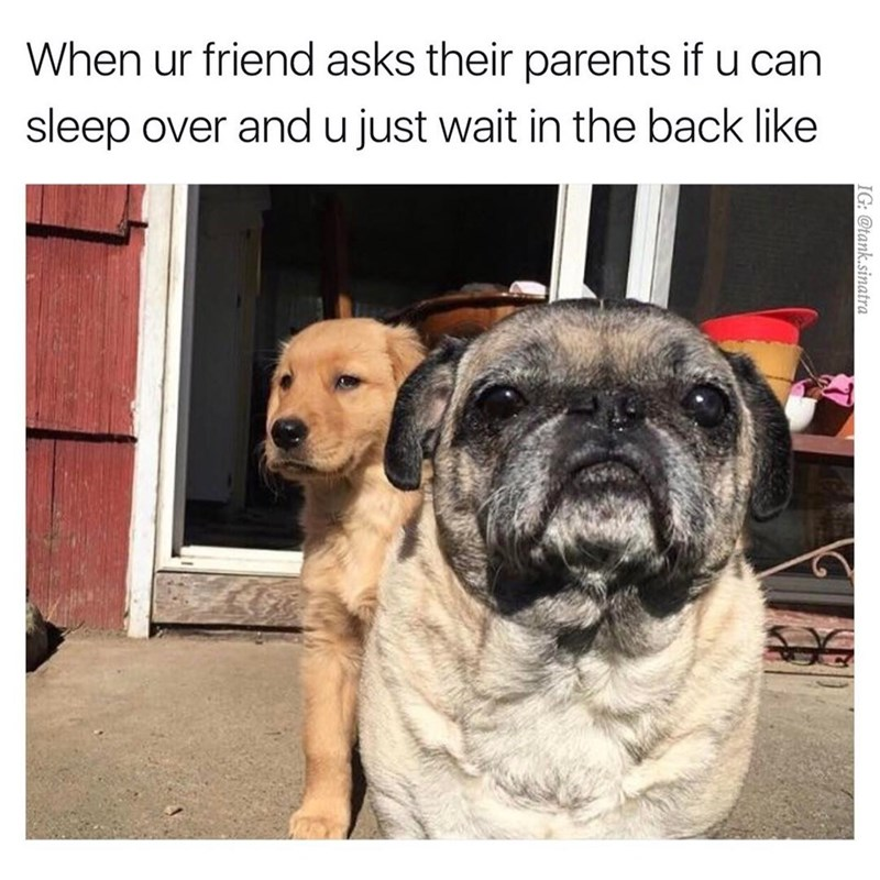 Funny meme of dogs posing like when you are at a friends house and he asks his parents if you can stay over.
