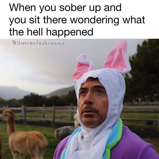 Funny meme about sobering up of Robert Downey Jr in a bunny suit in a field of llamas