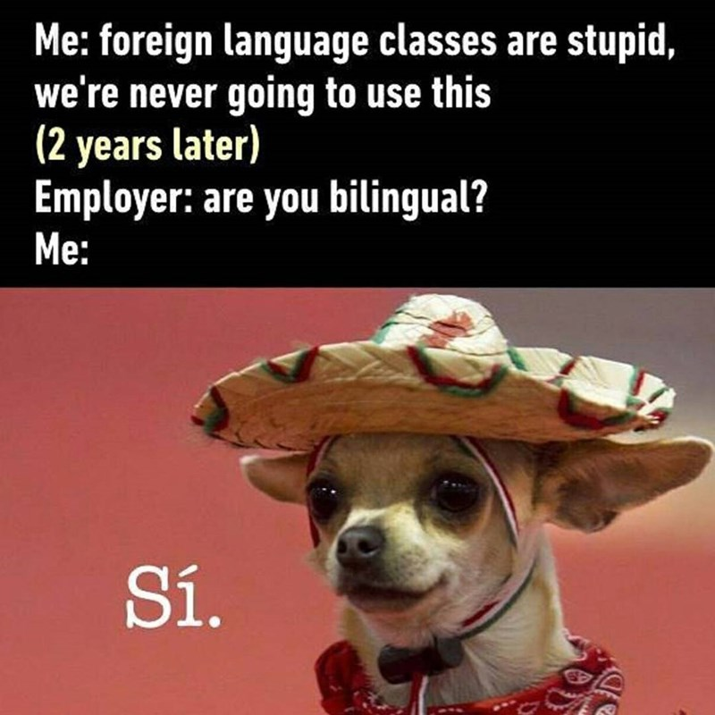 Funny meme of a Chihuahua wearing a sombrero about how Spanish classes can come in handy for a job.