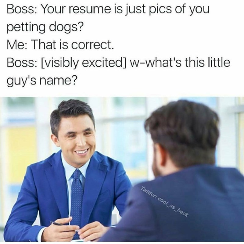 Very funny meme of a job interview in which the resume is just pics of dogs and it works.