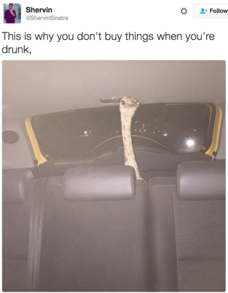 Drunk person ends up buying giant bird when they're blacked out.