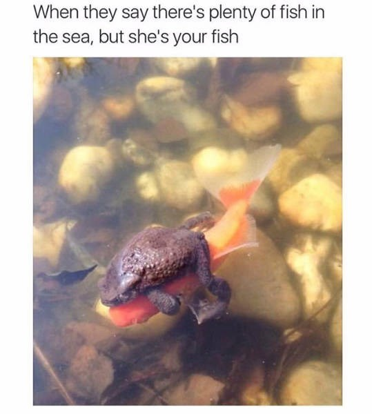 Adaptation - When they say there's plenty of fish in the sea, but she's your fish