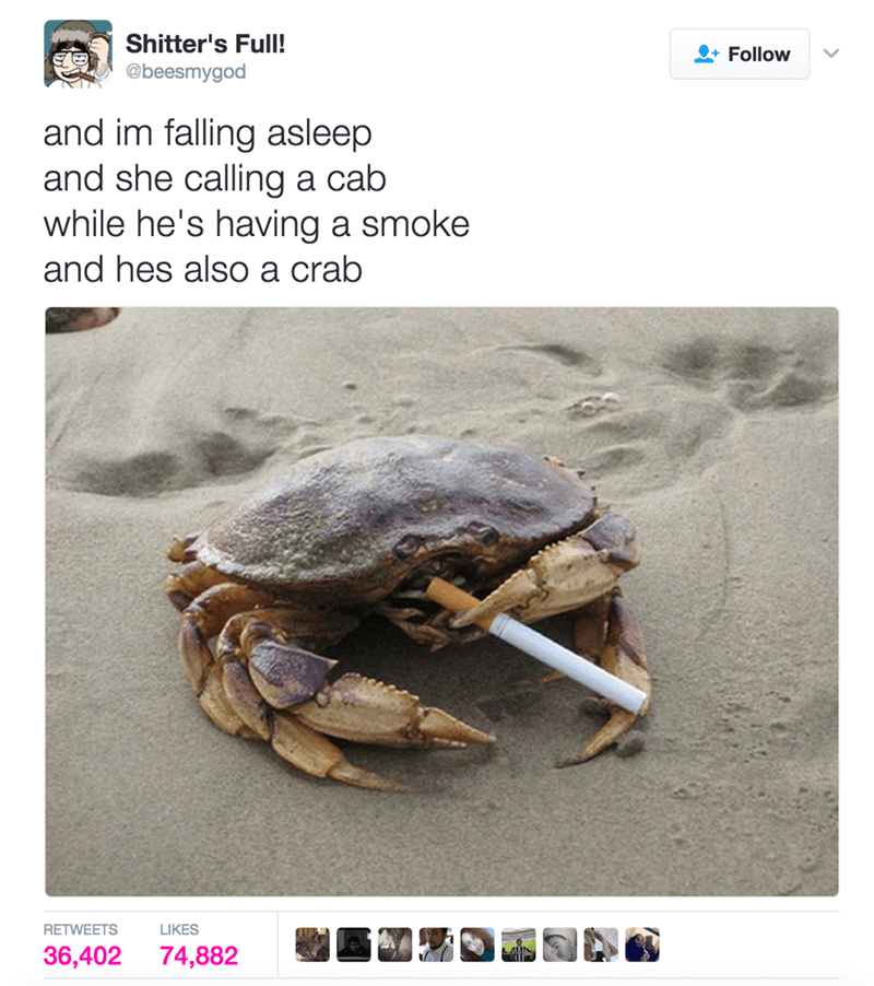 Turtle - Shitter's Full! Follow @beesmygod and im falling asleep and she calling a cab while he's having a smoke and hes also a crab RETWEETS LIKES 74,882 36,402