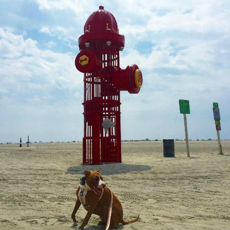 15 dog friendly beaches in the us i can has cheezburger