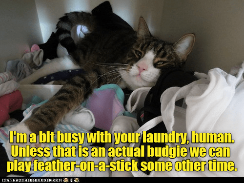 Funny cat meme of a cat that is resting on your laundry so he is busy right now.