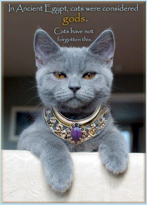 Cat - In Ancient Egypt, cats were considered gods. Cats have not forgotten this