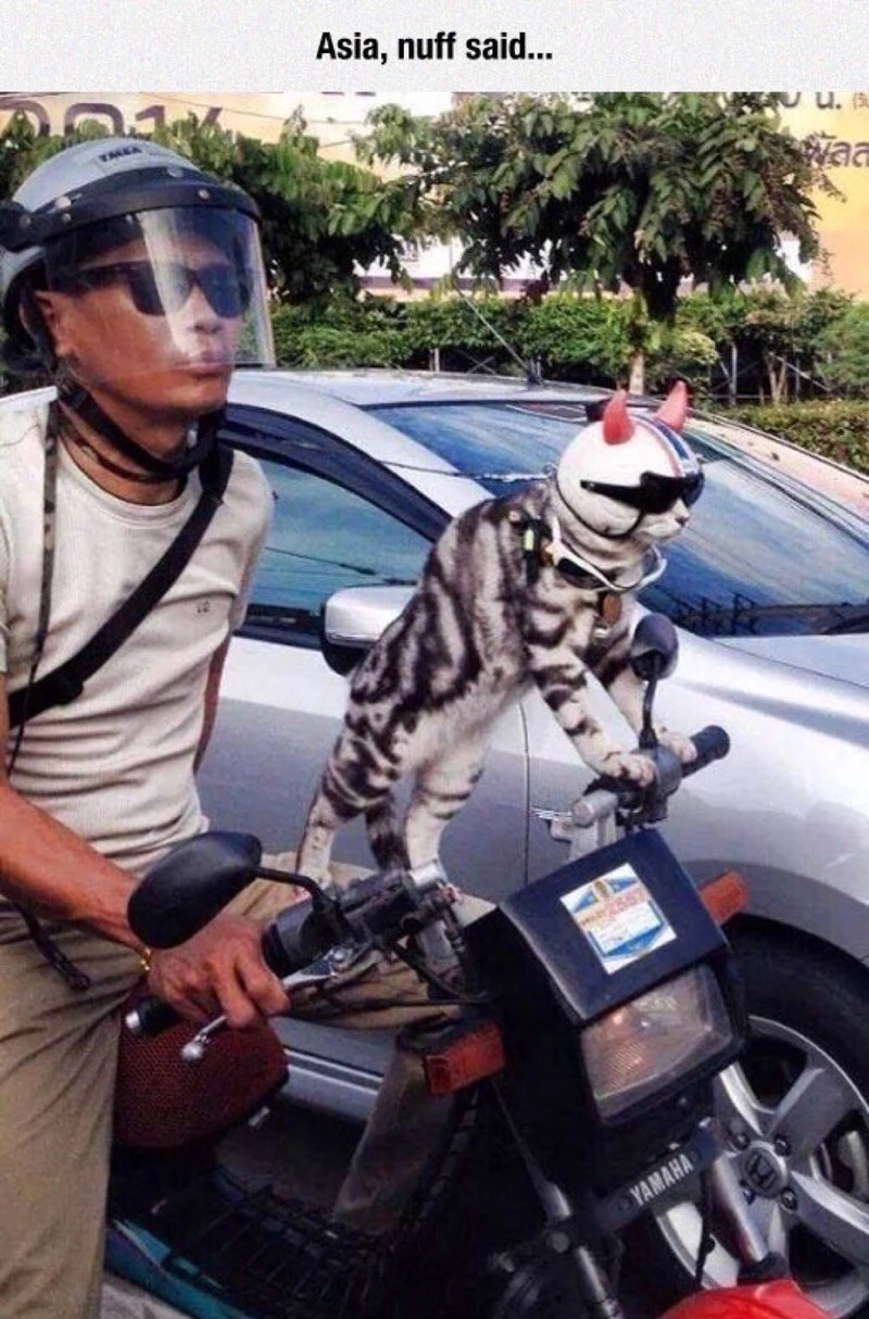 Funny memes - picture of a guy on a motorcycle with a cat wearing a helmet with shades, captioned 'Asia, nuff said...'