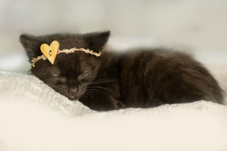sleeping black kitten with heart shaped bow on her head.