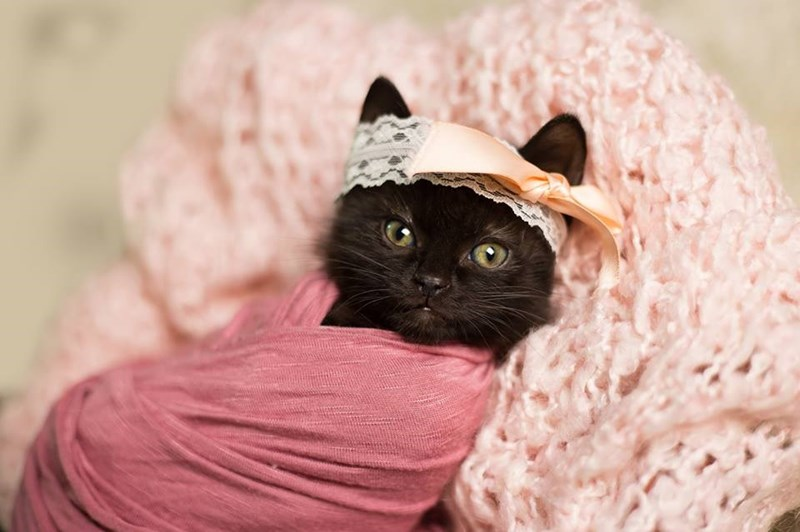 cute black kitten wrapped in pink garments