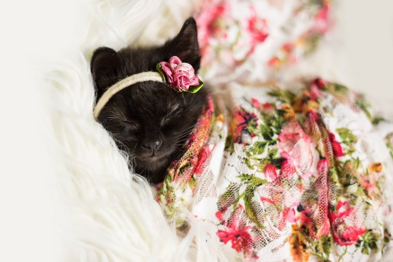 Sleeping kitten wrapped in floral blanket.