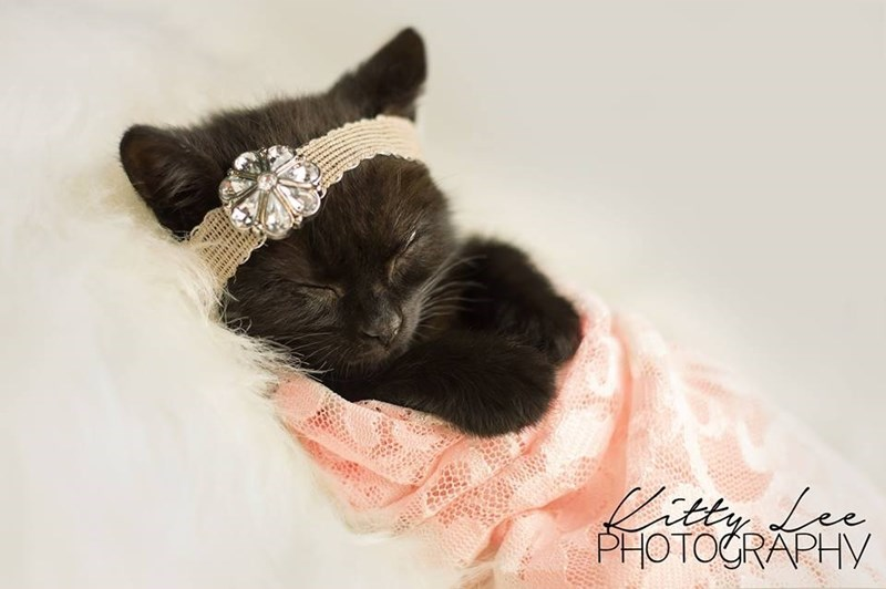 tiny black kitten sleeping like a princess