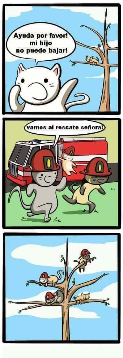 gatos bomberos tratan de rescatar gato en arbol