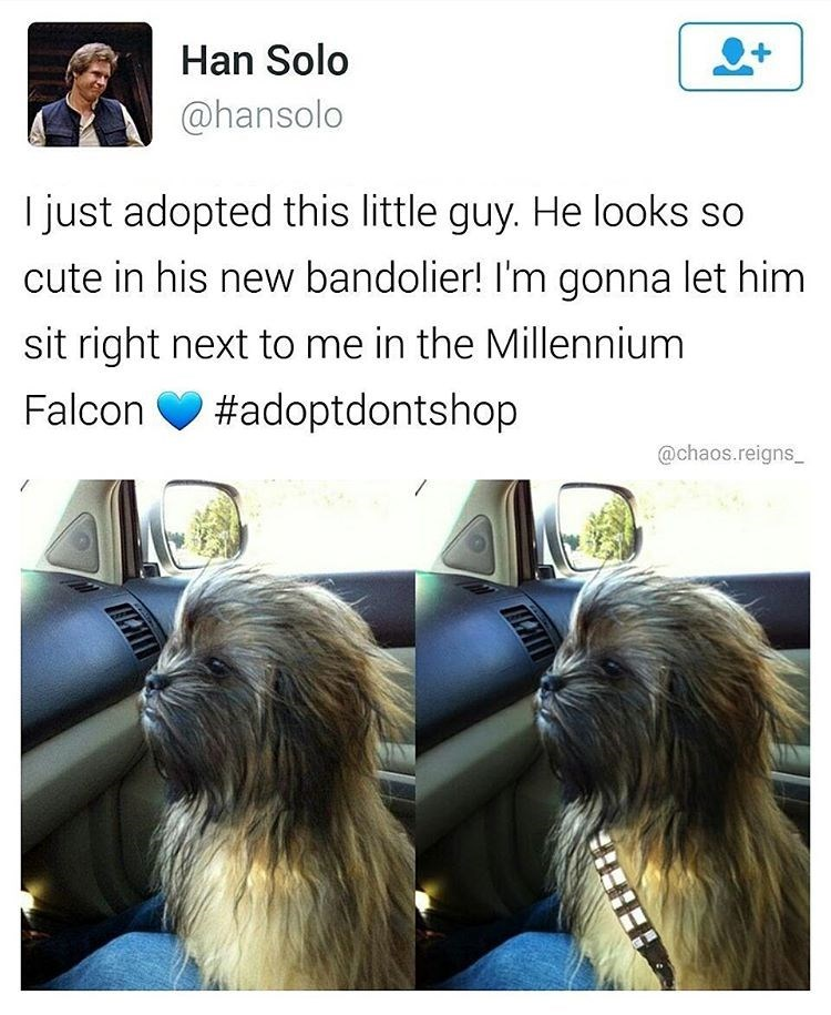 Fake tweet from Han Solo about adopting a wookiee and giving it a bandolier. Funny Star Wars meme.