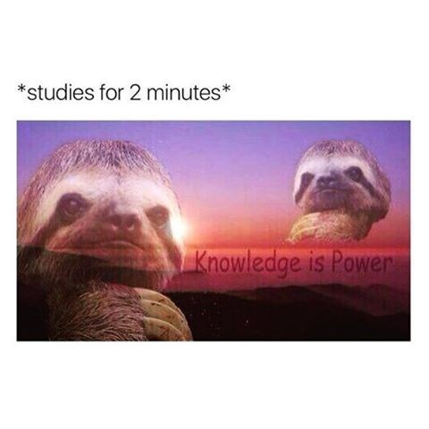 "When you study for two minutes, photo of sloth and sunset with the text that reads ""knowledge is power."""