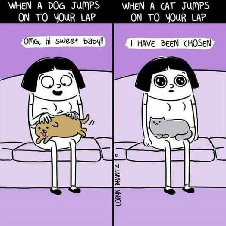 Funny web comic about dogs vs. cats.