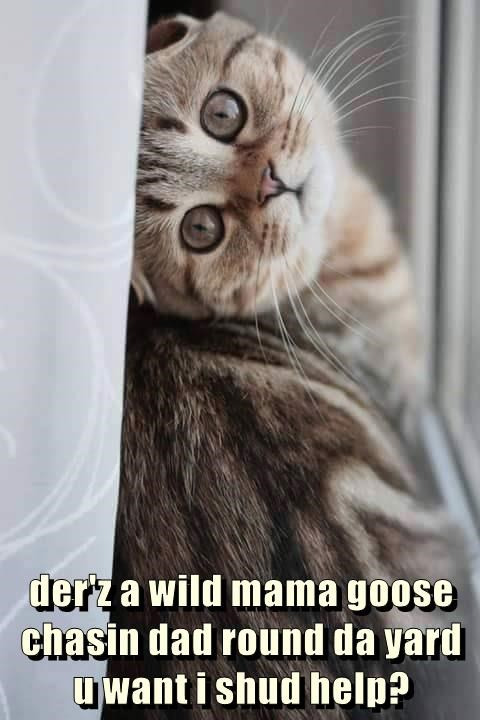 Cute kitten offers to help in getting rid of the goose running around the yard...