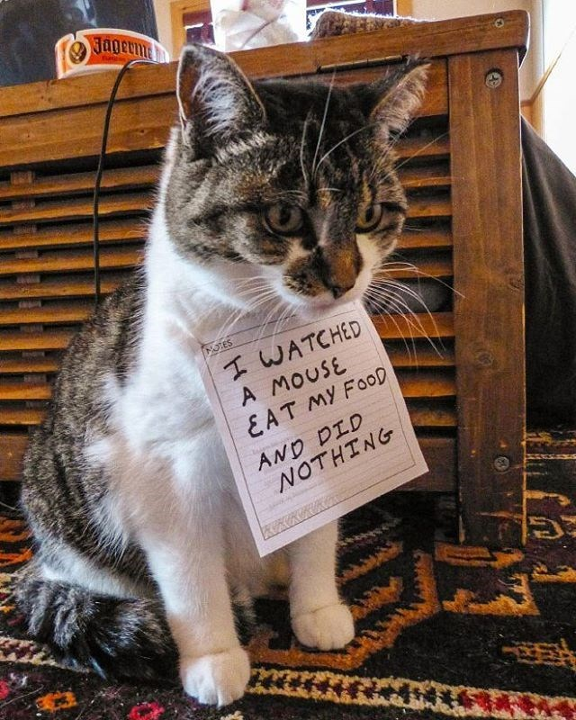 Cat with a note on its chest that says I let a mouse eat my food and did nothing.