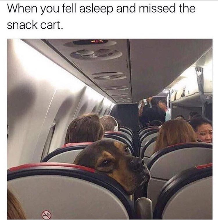 Dog looking down the aisle of an airplane as thought he missed the snack cart and needs something.