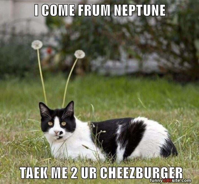 Cheezburger Image 9032282368