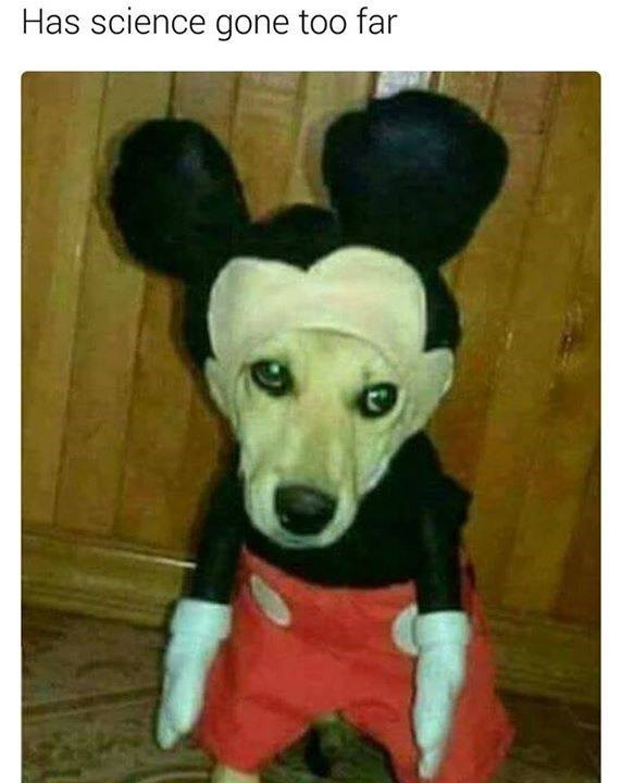 Funny meme of Dog in mickey mouse costume.