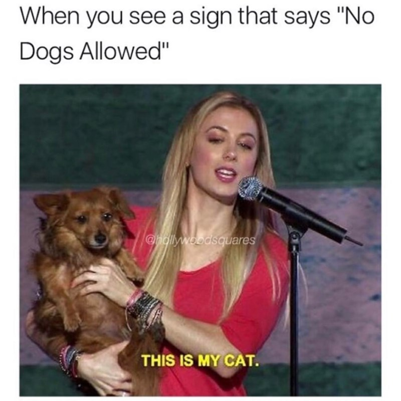 funny meme.