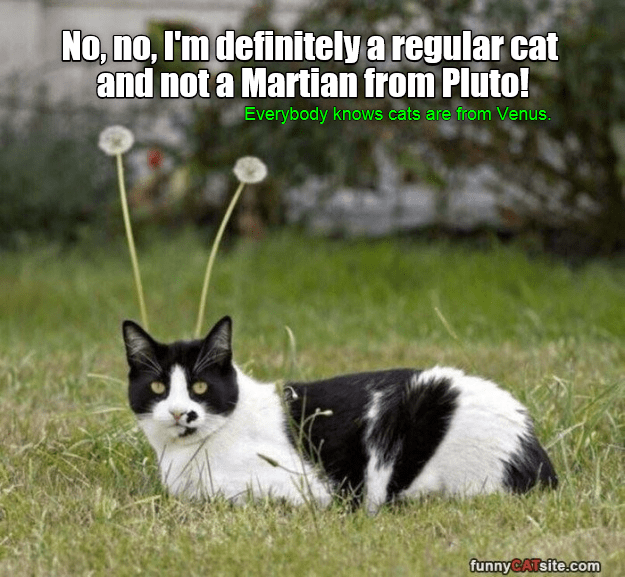 Funny meme of a cat that looks like a Martian with the dandelions behind his head.