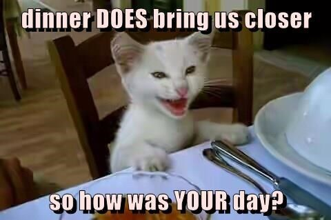 How Was Your Day - Funny Cat Meme
