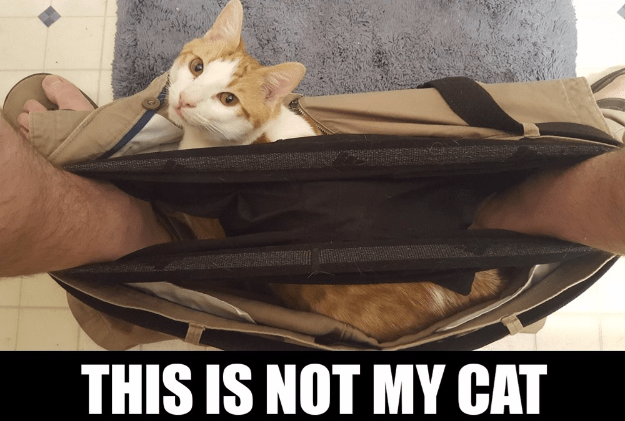 funny meme of a cat in someones pants who doesn't even own a cat