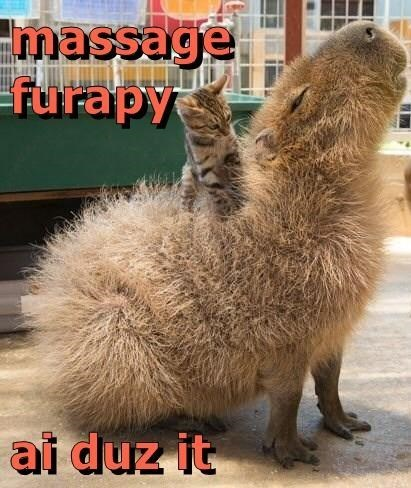 Funny meme of a cat giving another animal massage furapy.