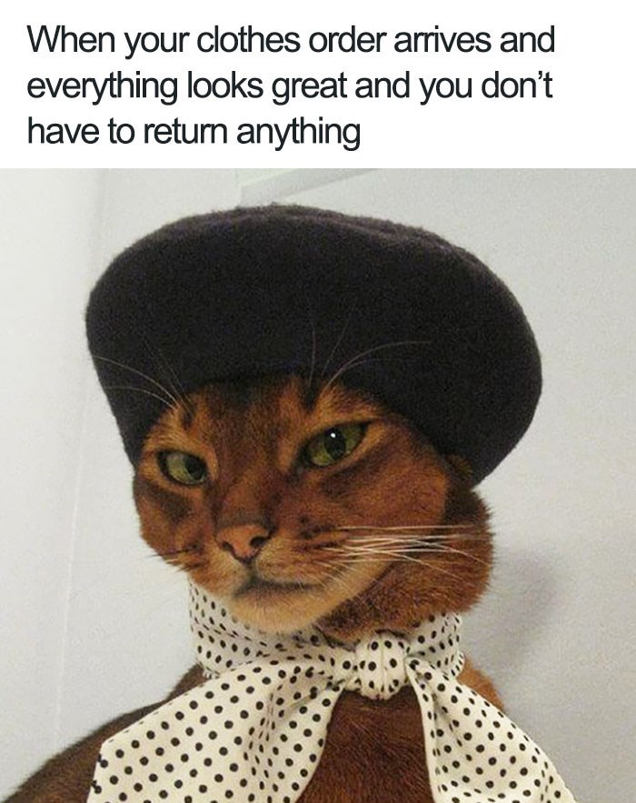 Funny cat memes - Cat wearing hat and scarf looking fabulous captioned into a funny meme about how it feels when everything you ordered online fits.