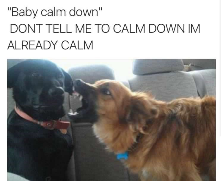 Funny meme and photograph of two dogs, the caption is mocking how women react to being told to calm down.