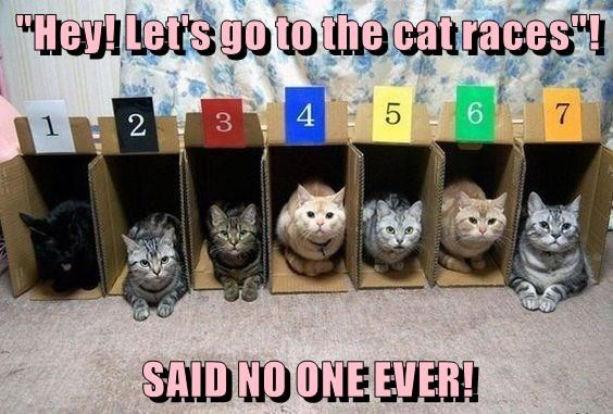 Funny meme of cats that are ready to race but probably won't.