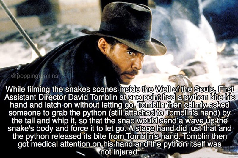 Font - @poppingremlins 'While filming the snakes scenes inside the Well of the Souls, First Assistant Director David Tomblin at one point had a python bite his hand and latch on without letting go. Tomblin then calmly asked someone to grab the python (still attached to Tomblin's hand) by the tail and whip it, so that the snap would send a wave up the snake's body and force it to let go. A stage hand.did just that and the python released its bite from Tomblin's hand. Tomblin then got medical atte