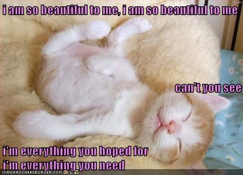 Funny meme of a sleeping cat meme.