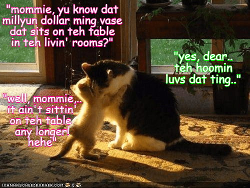 funny cat meme of a kitten confession to his momma that he broke the vase the humans really liked