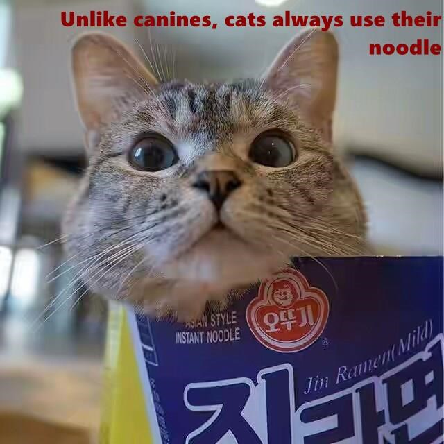 cat pun meme about how cat's use their noodle, unlike dogs.