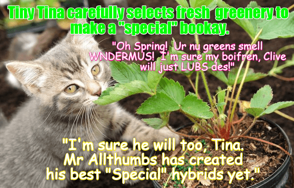 Funny lolspeak meme of a cat that is smelling a marijuana plant saying it will make great bouquet.