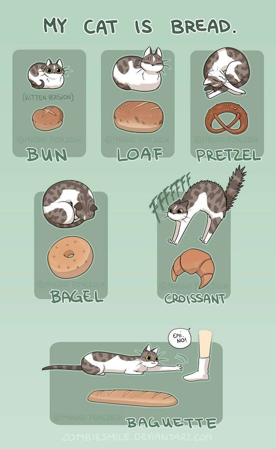 cat bread funny animation