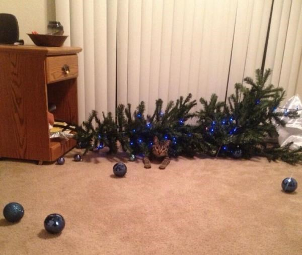 Cat knocked over the Christmas tree to show who is a boss or jerk.