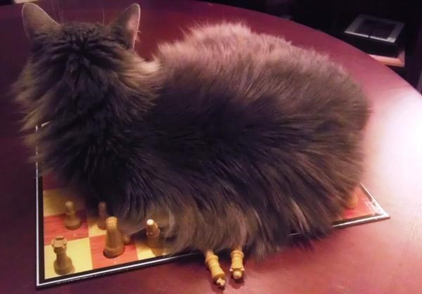 Funny picture of cat being a total jerk on our chess board