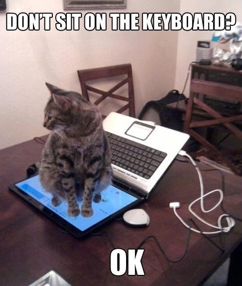 Funny picture of a cat not being a jerk by sitting on the screen instead of the keyboard of the computer.