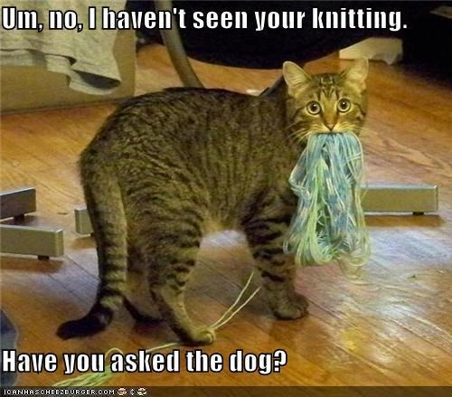 Cat meme of jerk cat caught red handed and trying to blame the dog.