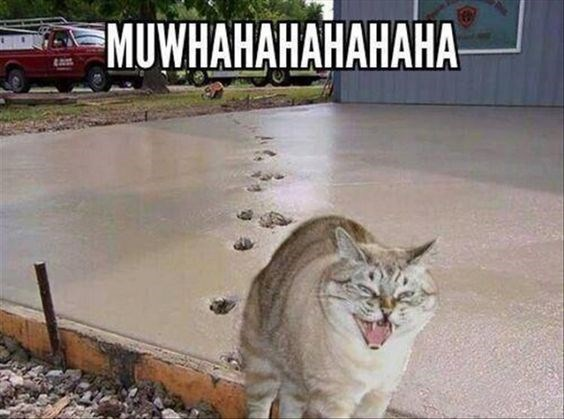 Evil laughter cat meme of a kitty that walked across the wet concrete and is now making muhahahah face.